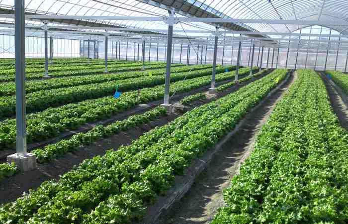هوشمند سازی و مزایای آن در گلخانه ها